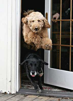 dogs-out-the-door